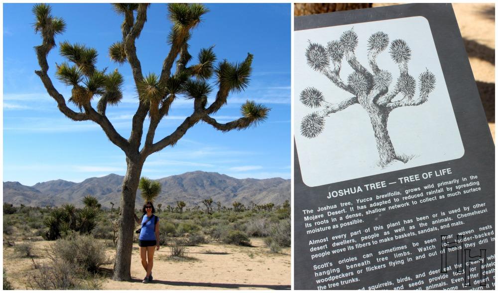 joshua tree hx